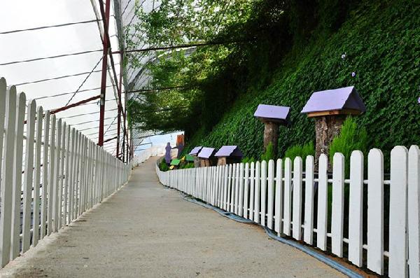 Mơ hàng rào