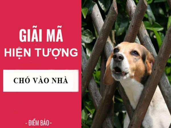 Chó vào nhà là điềm gì? Đánh con gì khi chó vào nhà